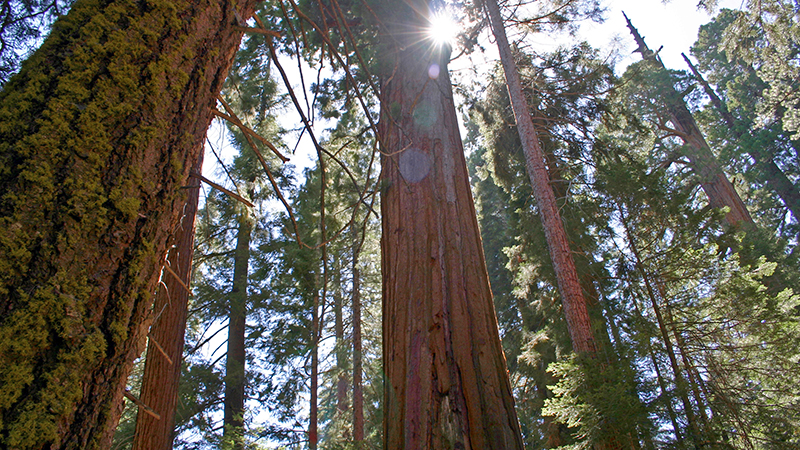 Giant Sequoia National Monument | Photo: Melissa Wiese, some rights reserved