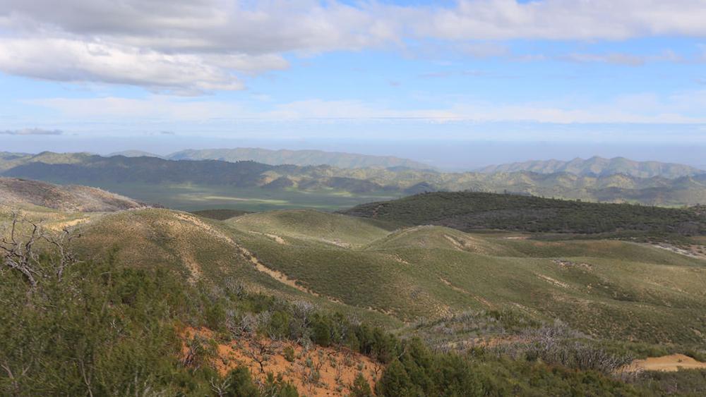 Forest with serpentine barren | Photo: Natividad Chavez, BLM