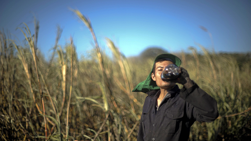 Josue Quintanilla drinks a soda as he works in a cane field in El Salvador. | Photo: Jose CABEZAS/AFP/Getty Images