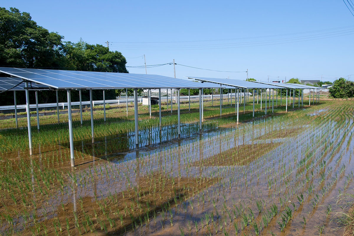Solar cell panels on paddy fields in Kamisu City, Ibaraki Pref., Japan. | Σ64 / Creative Commons License