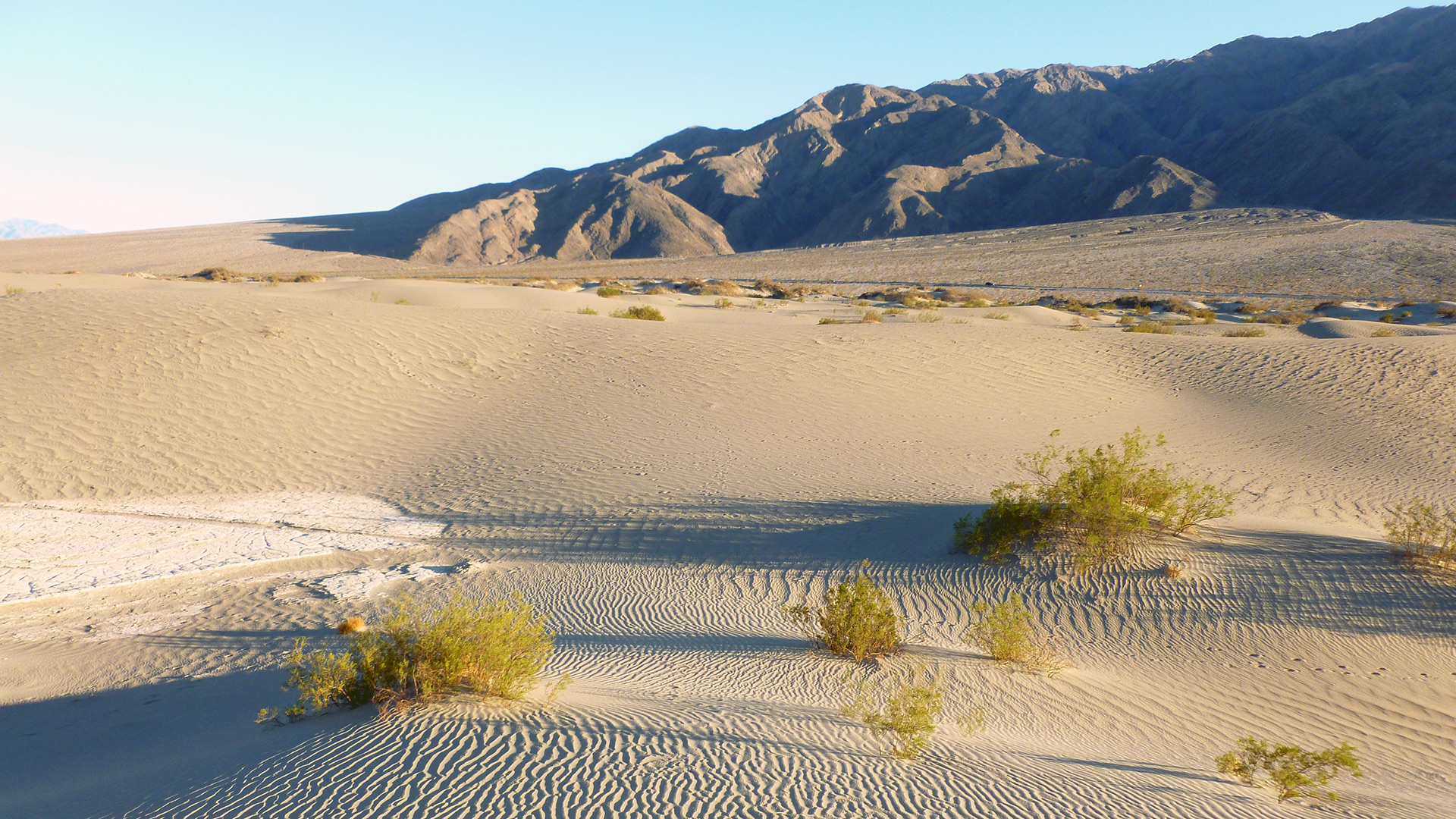 Death Valley Mesquite Dunes
