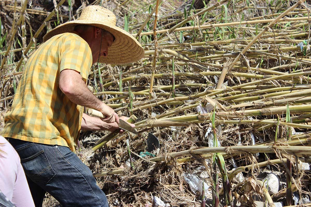 Artist Steve Appleton trims a reed | Spencer Robins