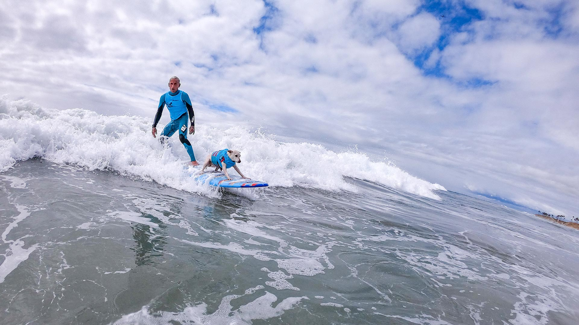 Man in blue rides along a wave with his dog in front of him