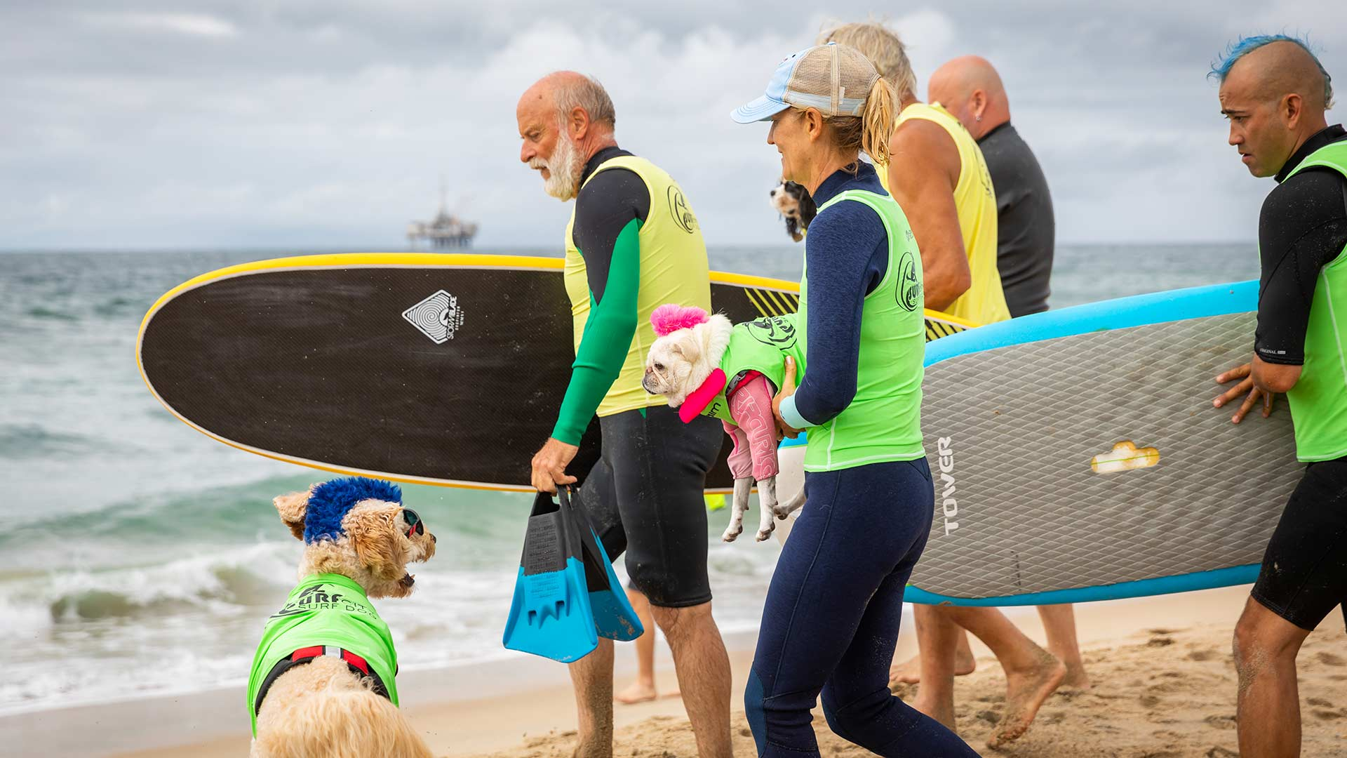 A group of surfers head to the water with dogs with blue and pink mohawks