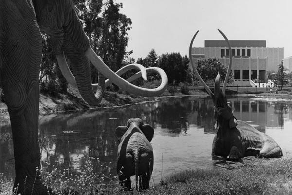 tar elephants