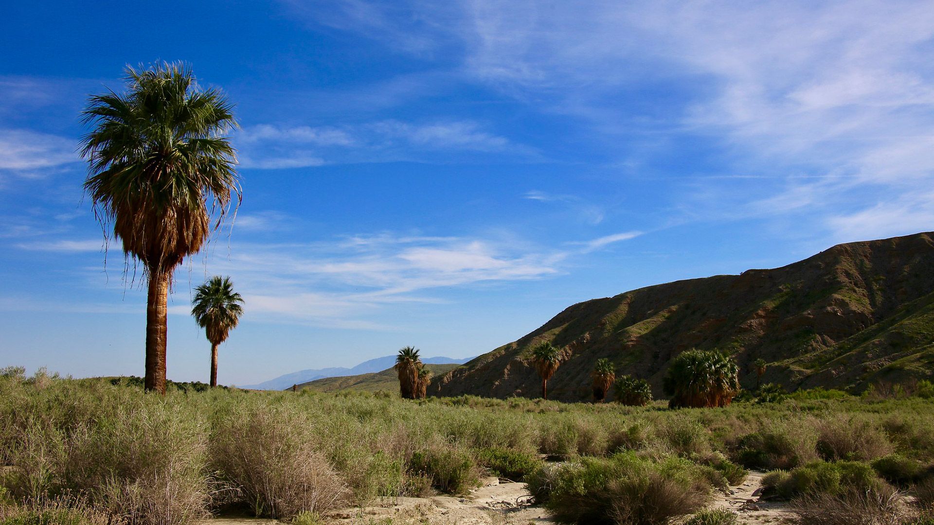 solitary palm trees at Thousand Palms Oasis