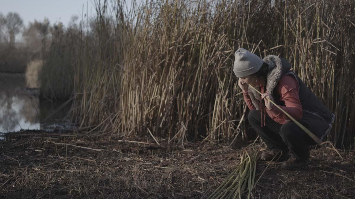 Tima Link (Šmuwič Chumash) gathers tule | Matthew Whalen