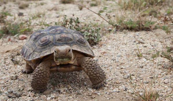 tortoisebaby