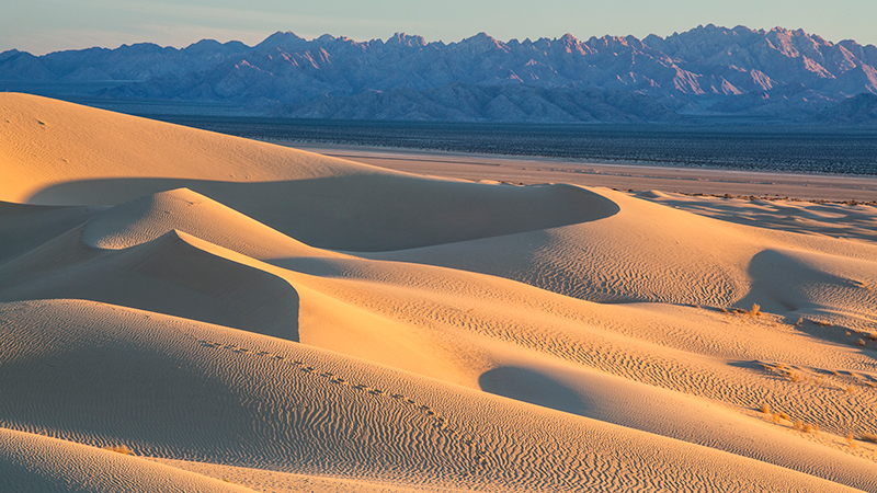 Dunes in the Mojave Trails National Monument | Photo: Bob Wick/BLM