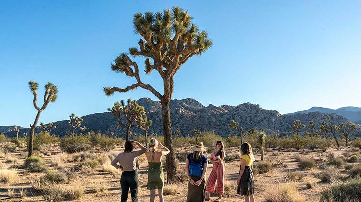 the joshua tree myth mutualism and survey