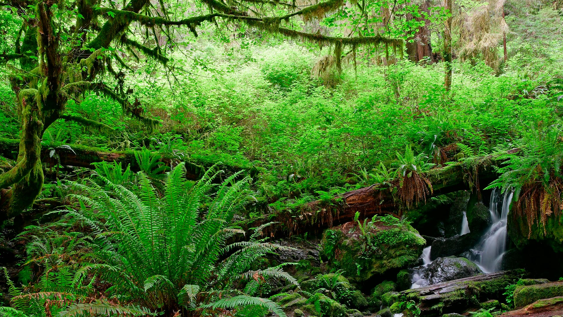 Trillium Falls, Redwood Natl Park