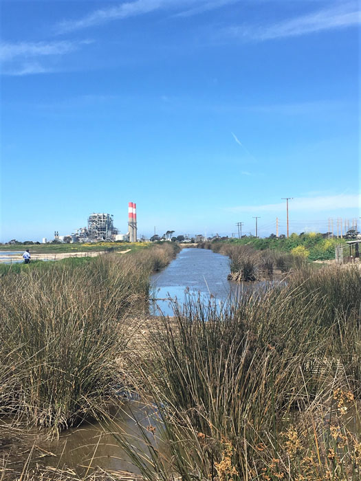 Wetlands and decomissioned power plant surrounding Ormond Beach. | Pilar Marrero