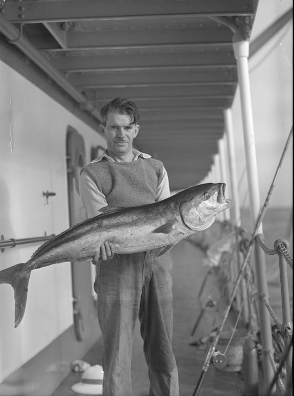 William Byers with yellowtail on Velero III near San Benito Islands, Mexico, 1936? | Allan Hancock Foundation Collection, USC Libraries