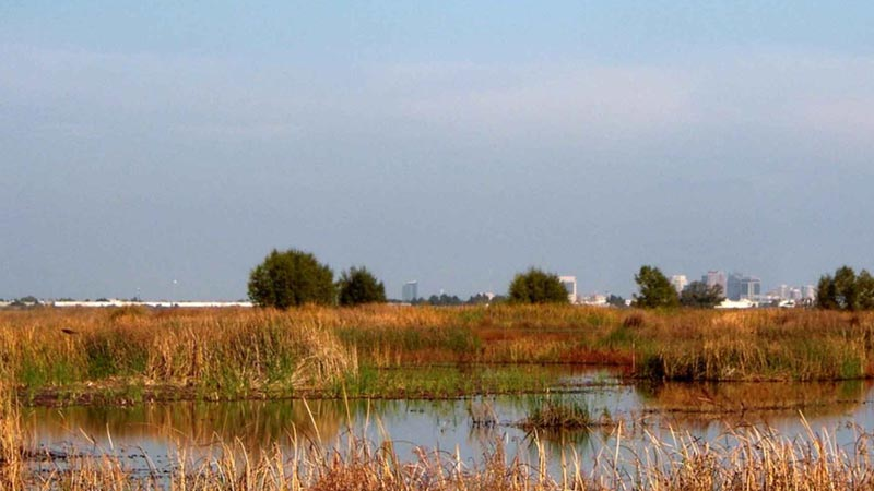 Standing water in the Yolo Bypass, with downtown Sacramento in the distance. | Photo: Tiffany Heitz, USFWS