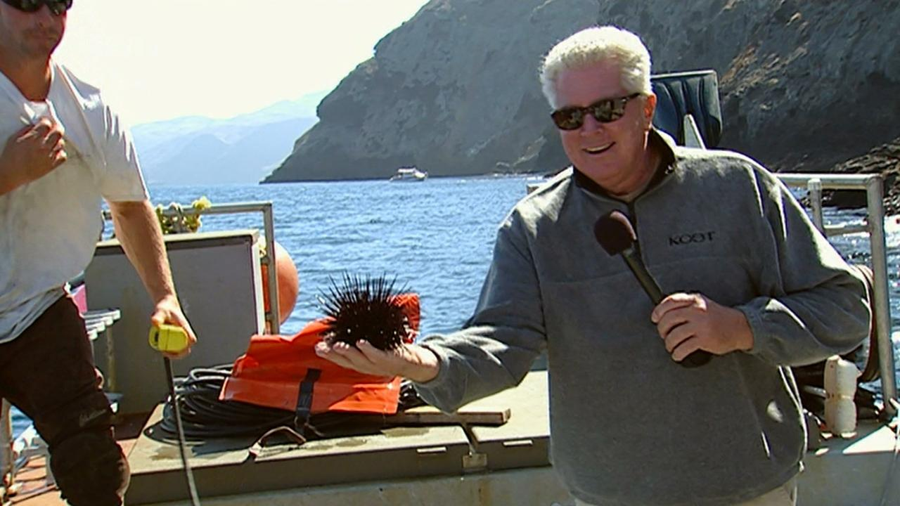 California's Gold: Sea Urchins