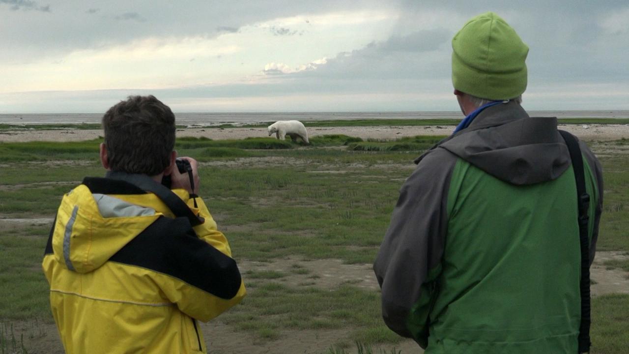 S1 E10: Polar Bears