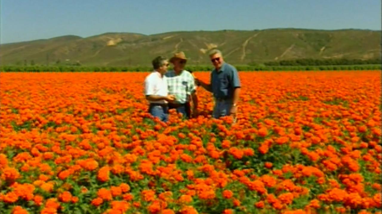 California's Gold: Huell Howser Discovers Bits and Pieces