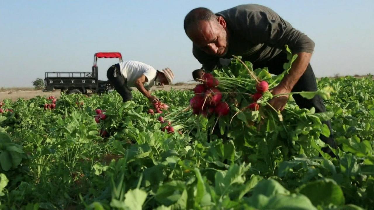 S1 E4: Food - Farming for the Future