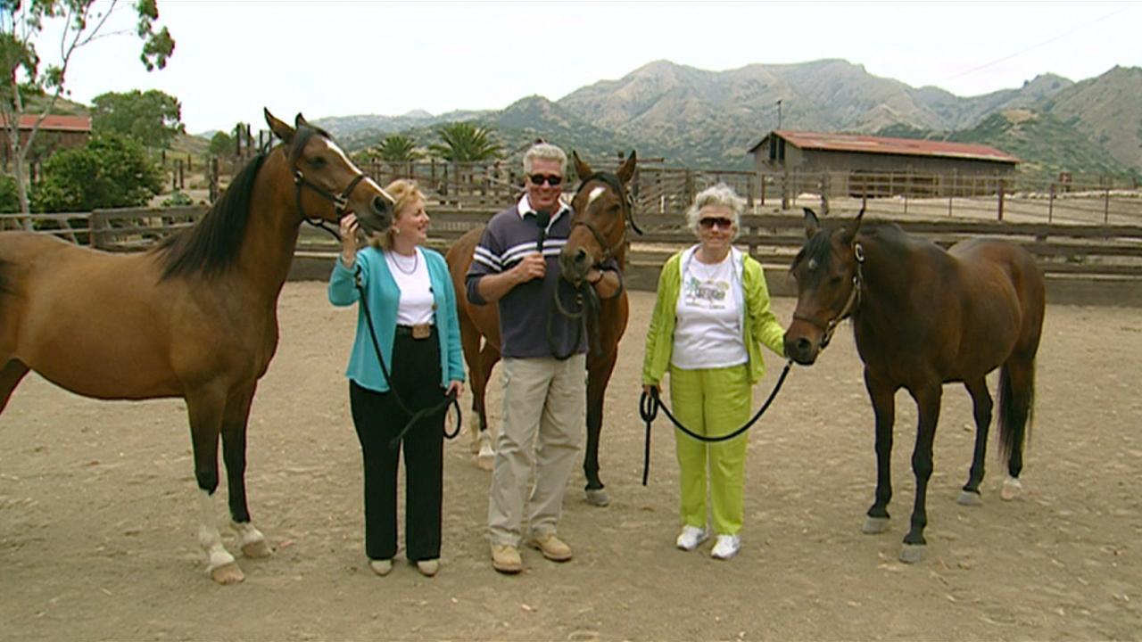 California's Gold: Catalina Arabian Ranch