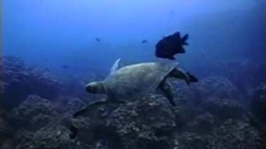 Galapagos Evolving