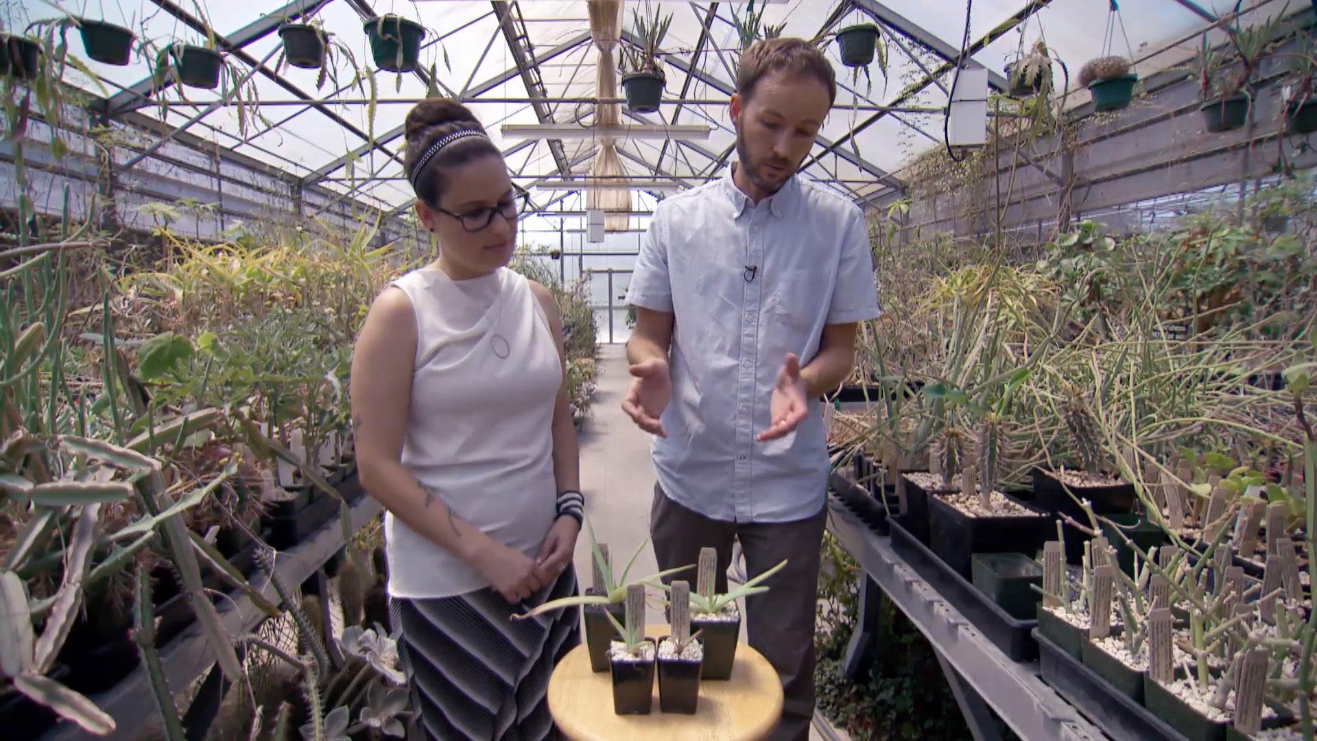 Plants in Peril Go Cold