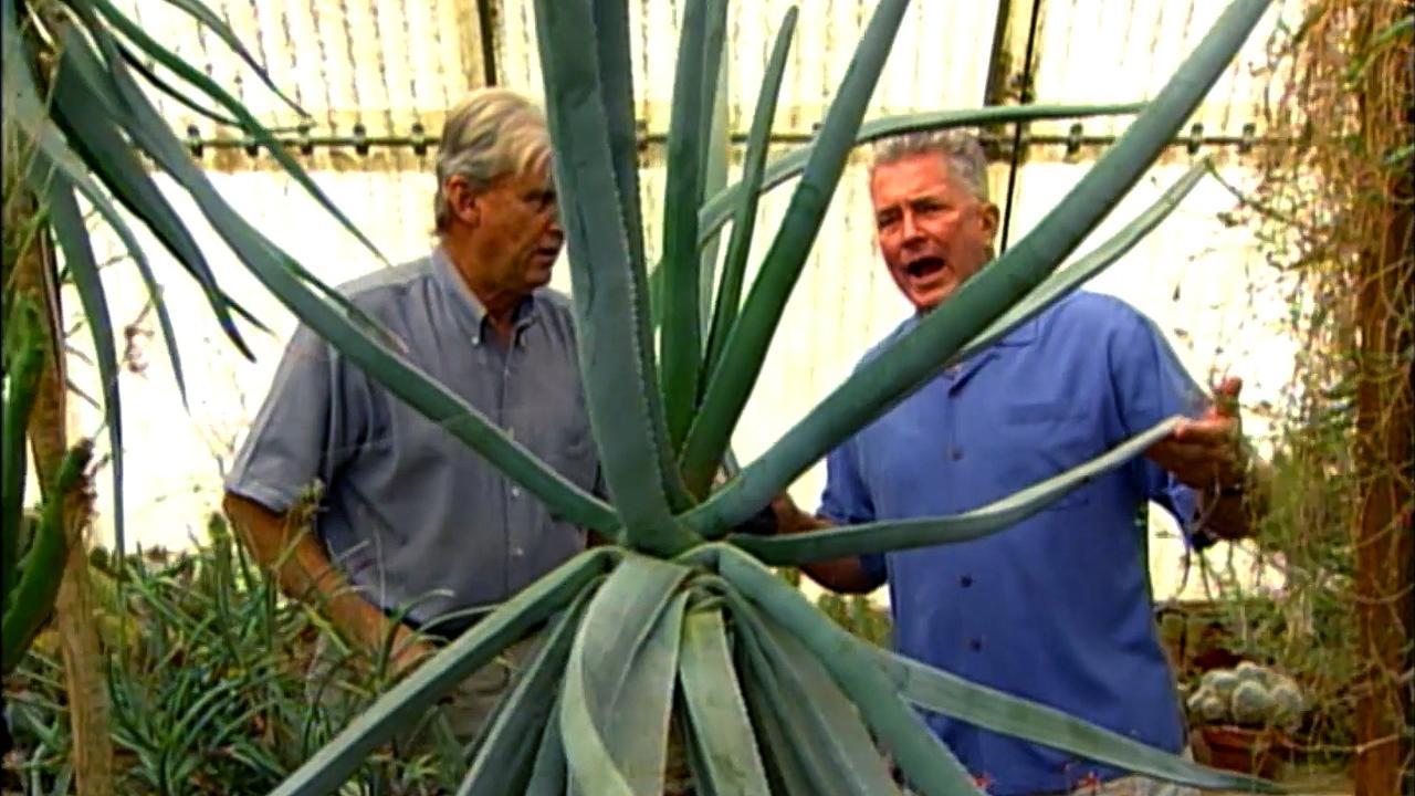 Palm Springs: Moorten Botanical Garden