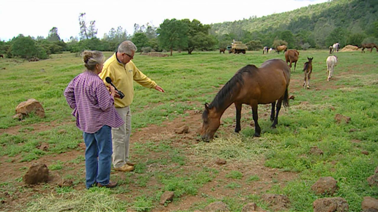 California's Gold: Wild Horse Sanctuary