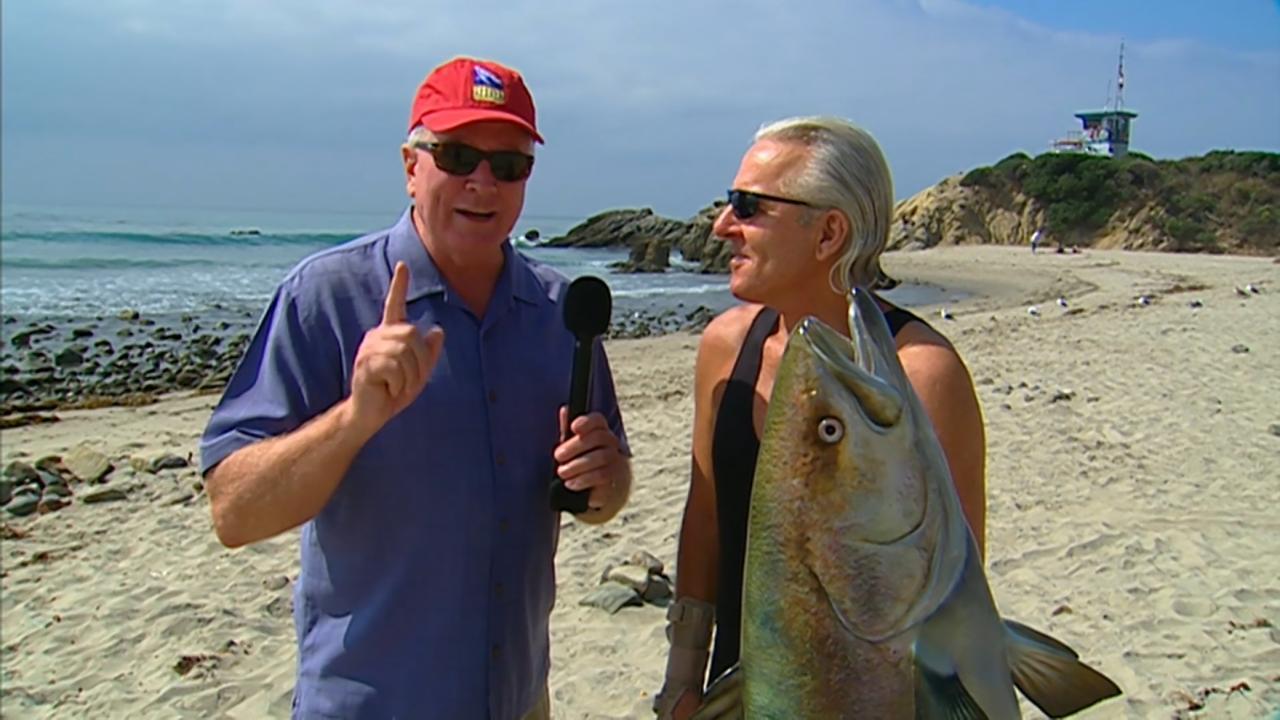 California's Gold: White Sea Bass