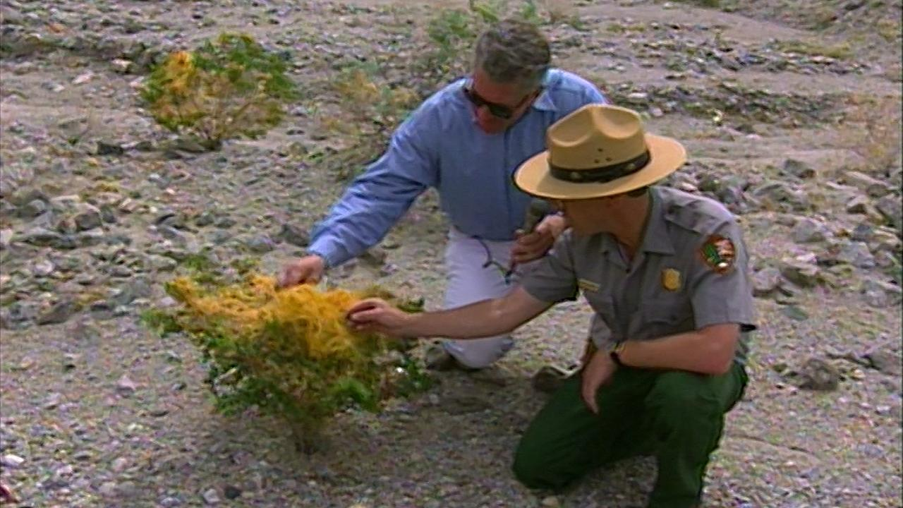 California's Gold: Life in Death Valley