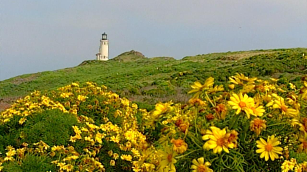 California's Golden Coast: Anacapa