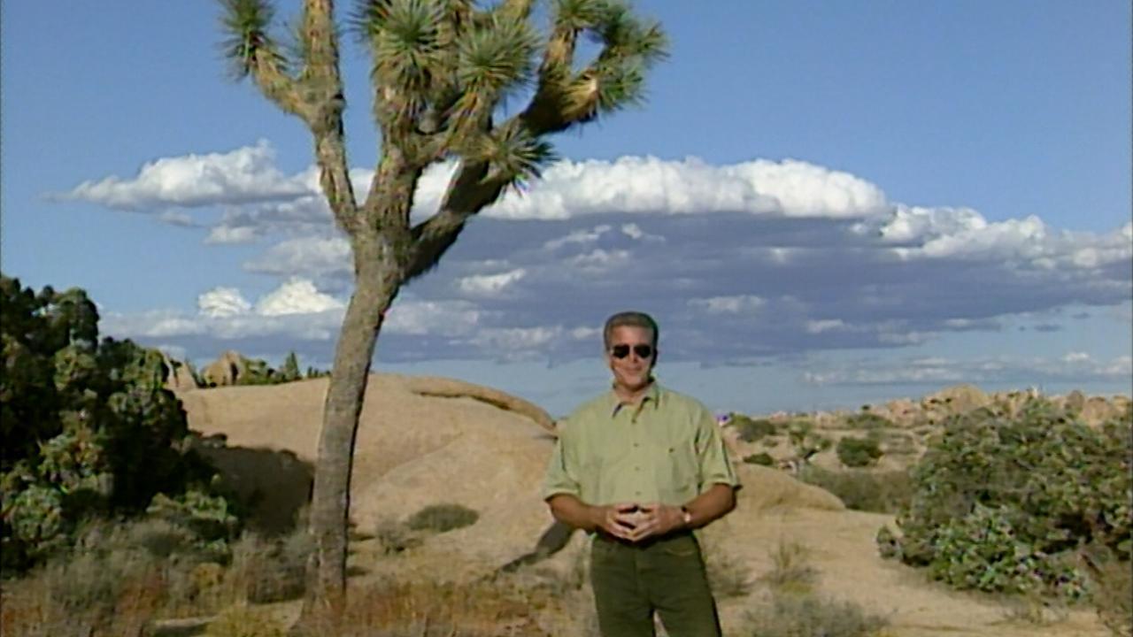 California's Gold: Joshua Tree