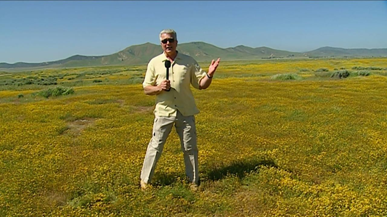 California's Golden Parks: Carrizo Plain