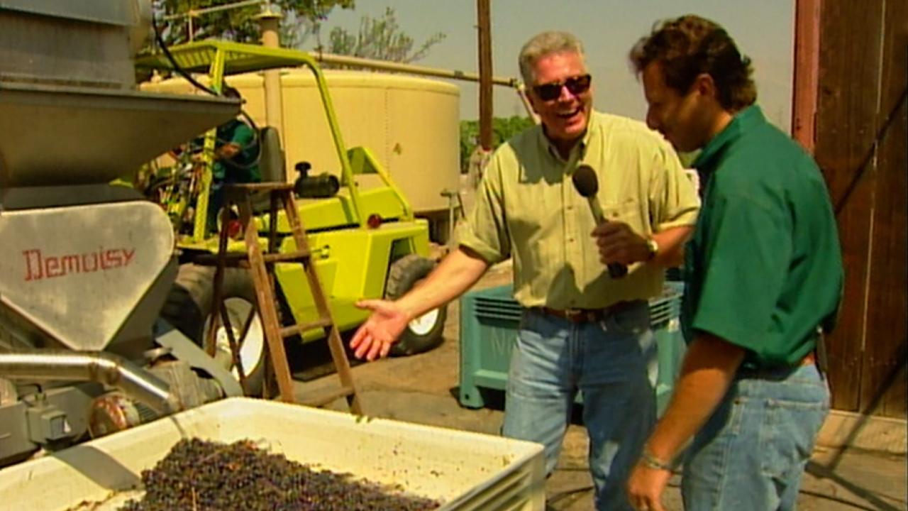 California's Gold: Wine