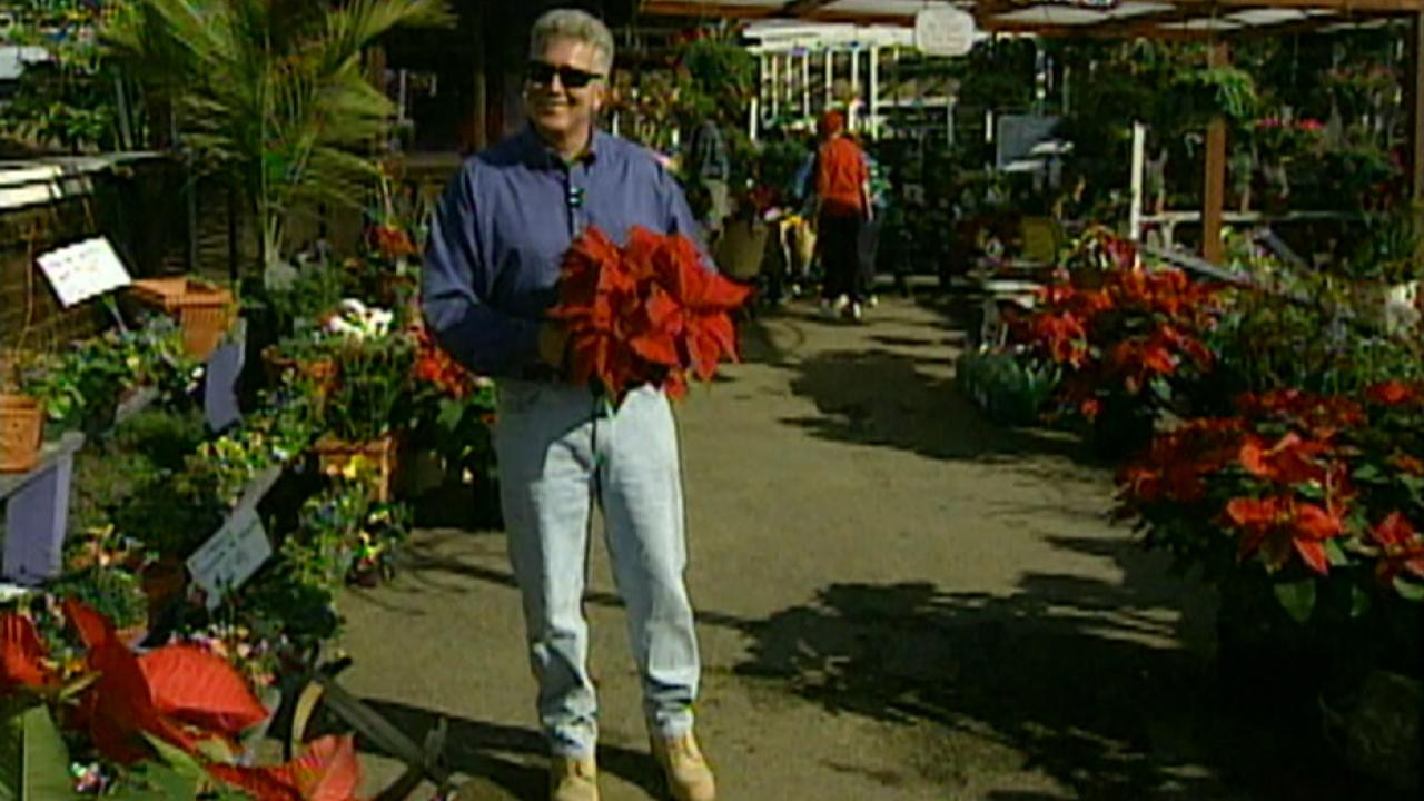 "California""s Gold: Poinsettias"
